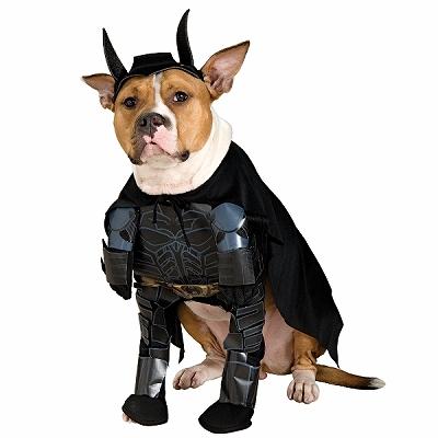 batdog1