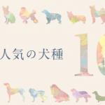 slide_10_dogs