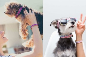 FriendshipCollar_matching_dog_collar_bracelet_01