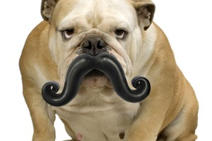 Humunga-Stache-Durable-Dog-Toy-02