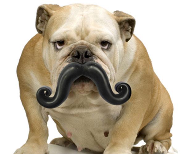 Humunga-Stache-Durable-Dog-Toy-02