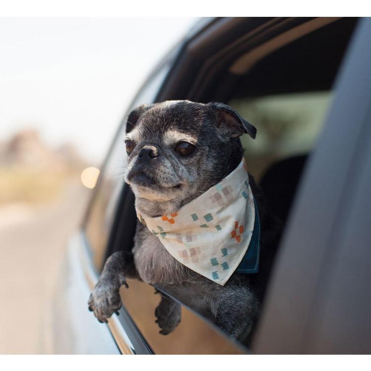 バンダナ風の犬用首輪がおしゃれ