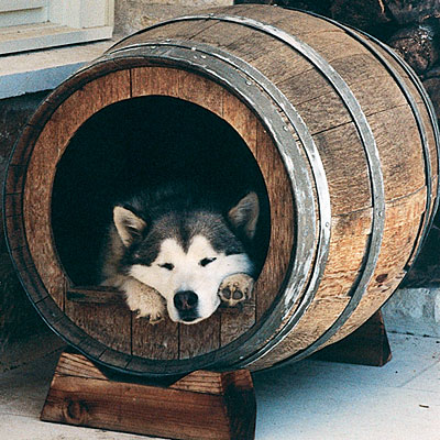 樽をそのまま犬小屋に