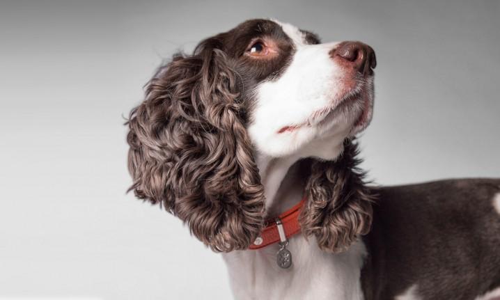 イタリア製のおしゃれな犬用首輪