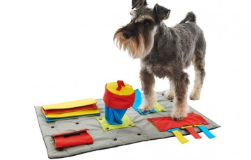 buster-activity-mat