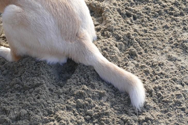 tail1