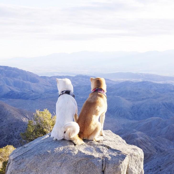 LA在住の2匹の柴犬2