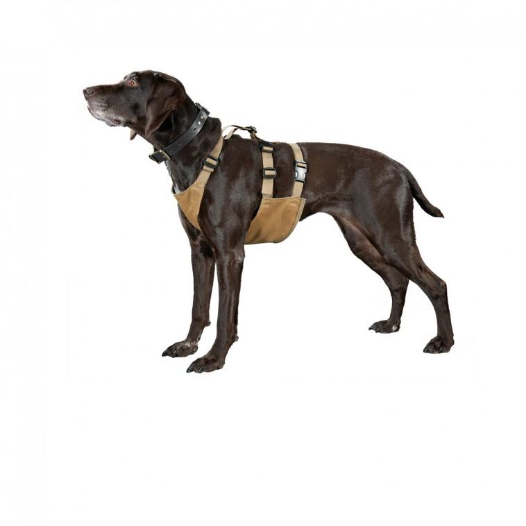 dogchest1