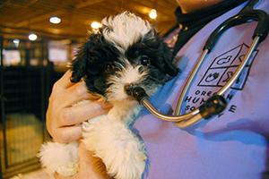 puppy_vet_ohs_rescue