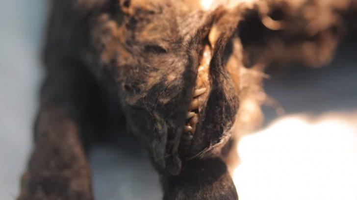 ★動物虐待から殺人事件へ・関連性の考察★ [無断転載禁止]©2ch.net YouTube動画>3本 ->画像>212枚
