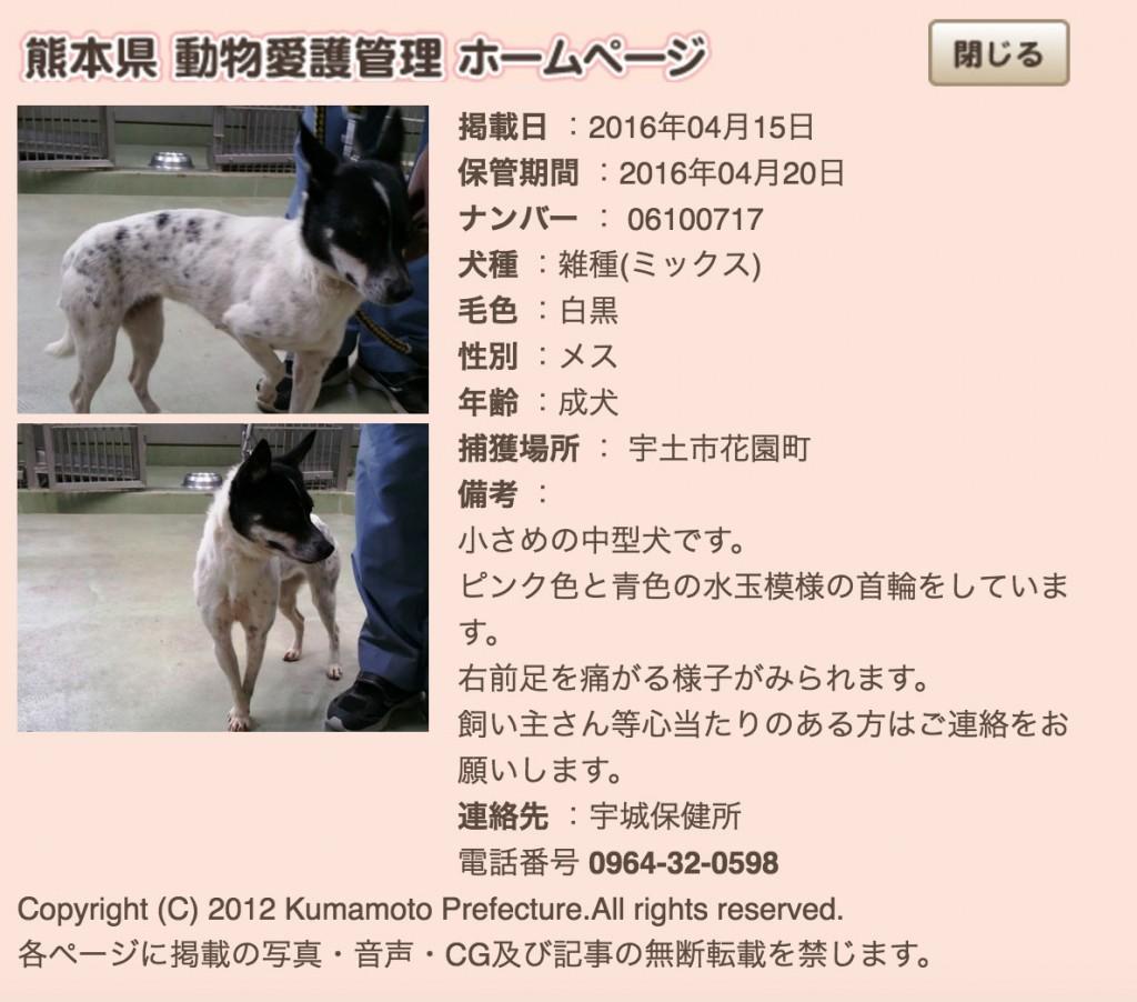 3-kumamotoken-aiken-search