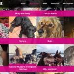 DogShare2