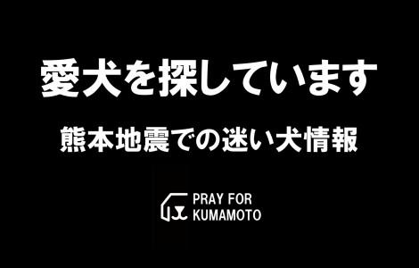 aiken-search-kumamoto