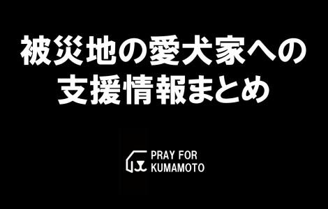 aikenka-support-kumamoto