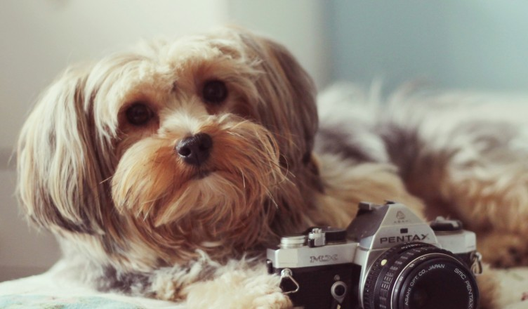 dog-with-camera-wallpaper-752x440