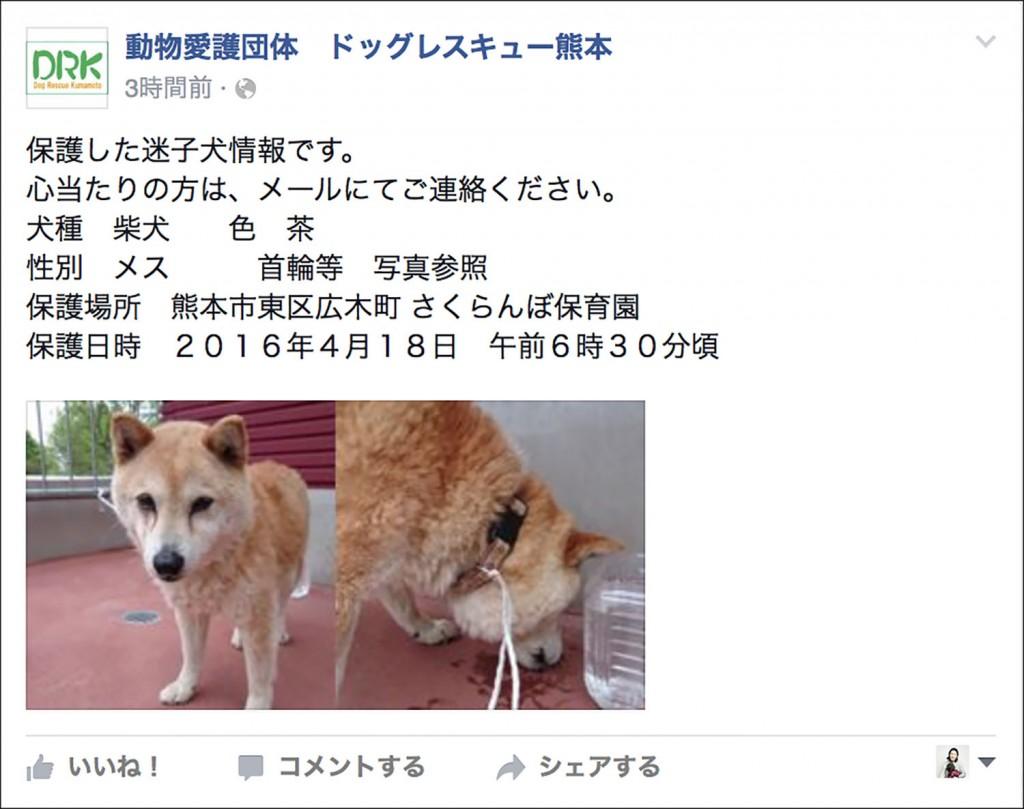 dogrescuekumamoto-0418-2