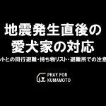 immediately-earthquake-doglover-kumamoto