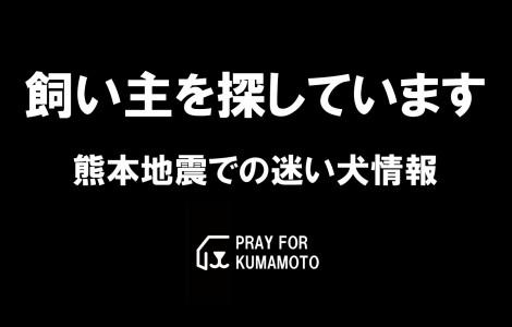 kainushi-search-kumamoto