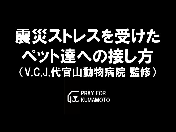 kumamoto-pet-stress