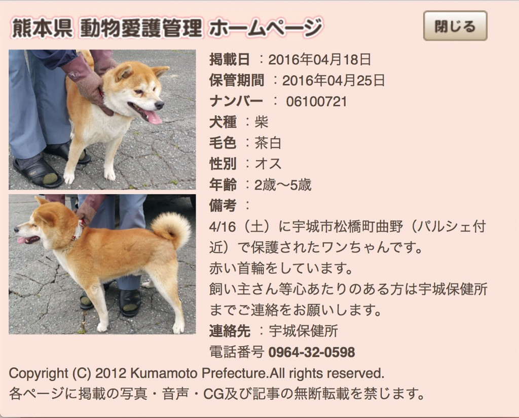 kumamotoken-aiken-search-0418-1
