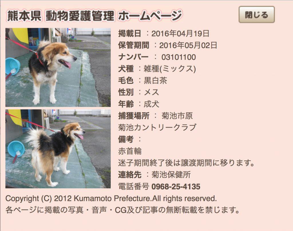 kumamotoken-aiken-search-0419-7