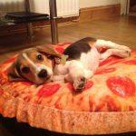 pizzadog