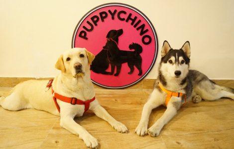 puppychino1