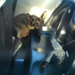 HT_dog_rescued2_floating_cf_160518_4x3_608