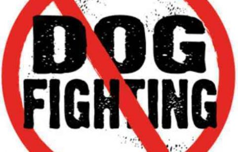 dog_fighting_circle
