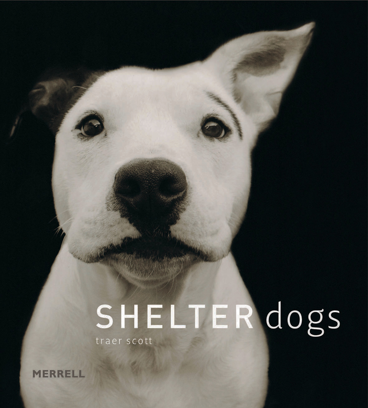 Shelter+Dogs+cover+best