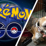Pokemon+Dog+Saved