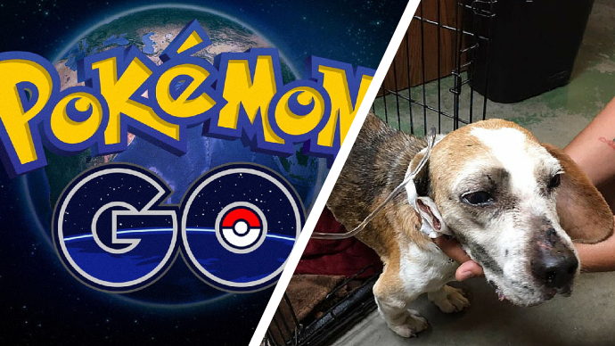 Pokemon+Dog+Saved