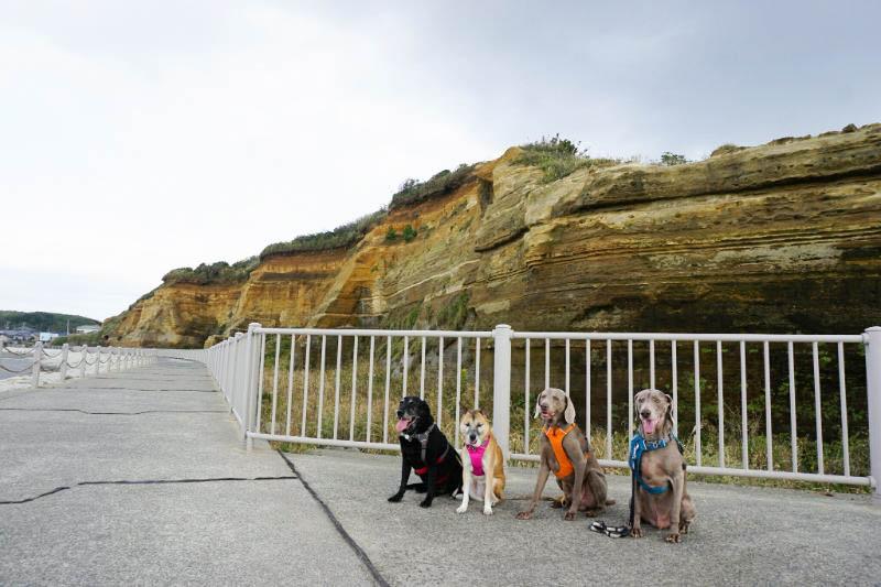 中谷6 海で遊べるキャンプ場用写真_8185-2