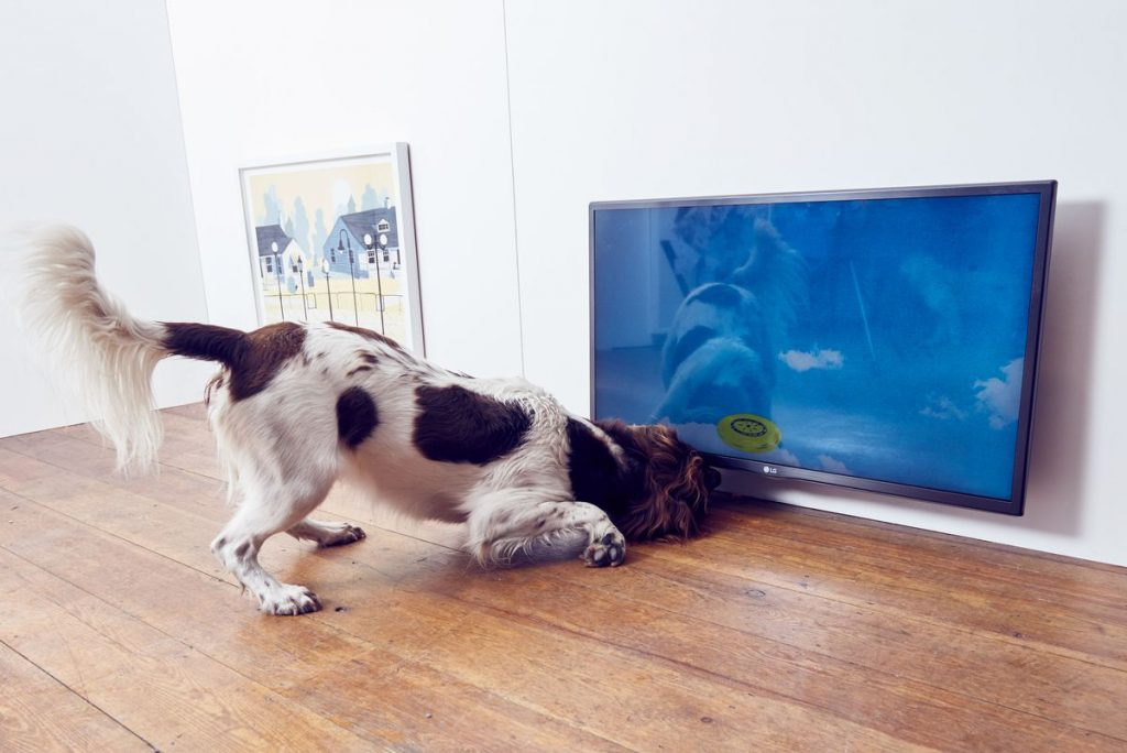 contemporary-art-for-dogs-3