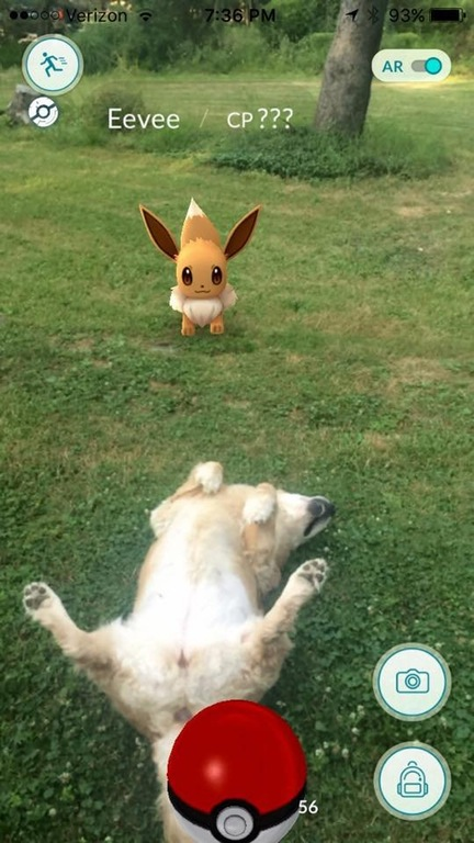 pokemon-go-dog-meme-4