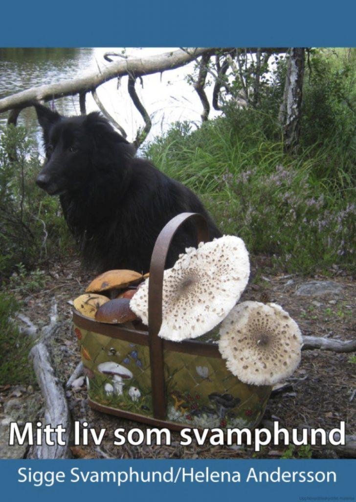 svamp-hund